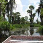 Yihaa – let's go to the swamps