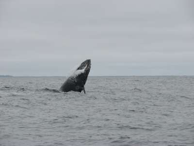 Whale Watching tour Monterey