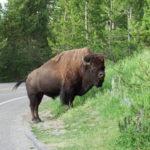 Yeeeees – Yellowstone