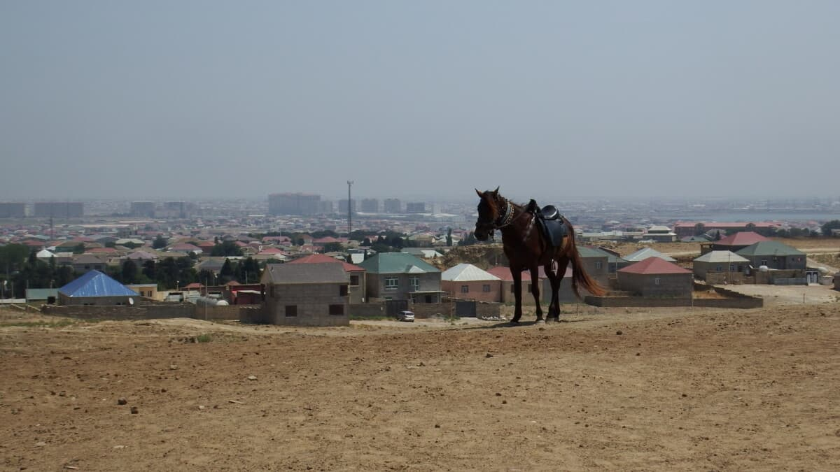 Horse in Azerbaijan